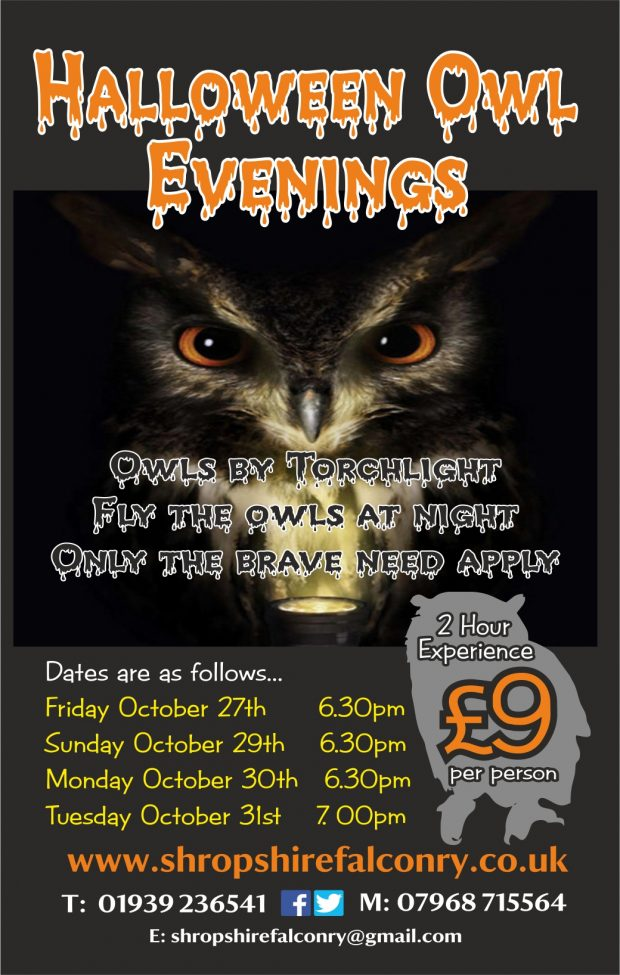 Halloween Owls by Torchlight